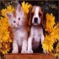 Pretty kitty and love dog
